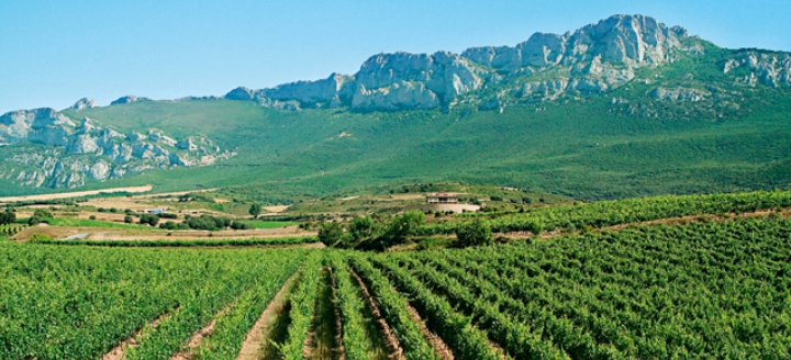 vitigni a La Rioja