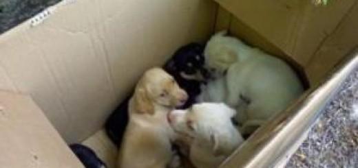 cuccioli abbandonati 1