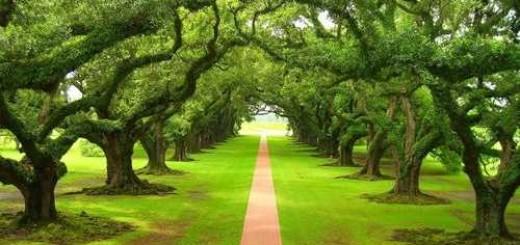 alberi_parco