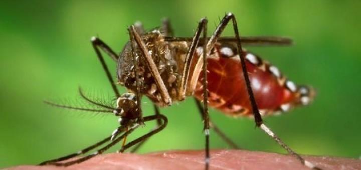 zanzara-1132x670