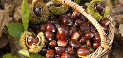 Autumn chestnut mood