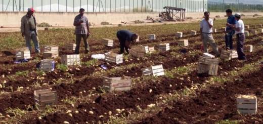 azienda_agricola