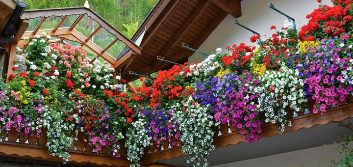 fiori-da-balcone-pendenti